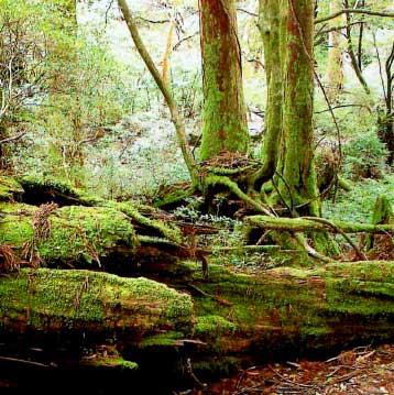 苔に覆われ草木の生い茂った土埋木です。